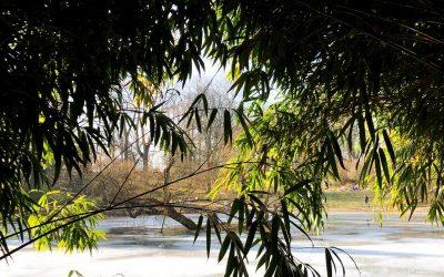 Schöne wintergrüne Stauden